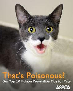 The ASPCA Animal Poison Control Center (APCC) wants to make sure that their lifesaving information stays right at your fingertips, so they shared these 10 tips for keeping your pet safe from poisoning: http://www.aspca.org/blog/believe-it-or-not-its-poisonous-pets-apcc-shares-poison-prevention-tips