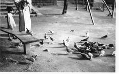 境内の鳩と戯れる子供