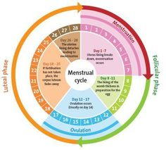 Menstrual cycle chart health benefits pinterest menstrual