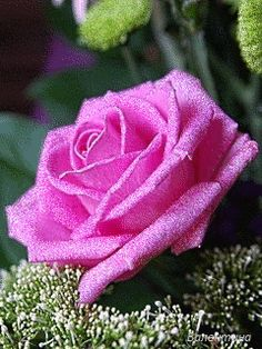 Beautiful Flowers Pictures, Beautiful Gif, Flowers Gif, Images Gif, Good Night Image, I Wallpaper, Purple Roses, Happy Weekend, Animation