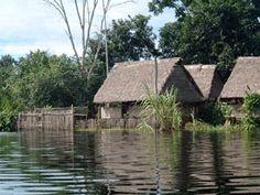 casa de la selva - Buscar con Google