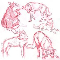 desenhos wolf and horse Animal Sketches, Animal Drawings, Drawing Sketches, Art Drawings, Sketching, Wolf Drawings, Wolf Base, Sketch Style, Dog Anatomy