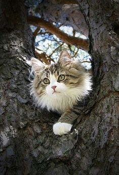 This cat is just beautiful!