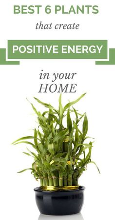 Best 6 Plants That Create Positive Energy In Your Home - House Plants - ideas of House Plants - According to many scientists there are a lot of plants which will provide positive energy and in th Feng Shui, Positive Energie, Creating Positive Energy, Staying Positive, Best Indoor Plants, Indoor Plants Clean Air, Air Plants, Bedroom Plants, Good Energy