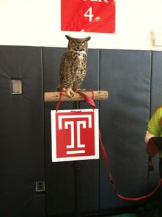 Stella the Owl is here to greet all the kids for our National Girls and Women in Sports Day event!
