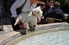 Thirsty at the fountain, but not jumping in.