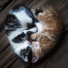 #Cats  #Cat  #Kittens  #Kitten  #Kitty  #Pets  #Pet  #Meow  #Moe  #CuteCats  #CuteCat #CuteKittens #CuteKitten #MeowMoe      Twin heart! ...   https://www.meowmoe.com/139824/