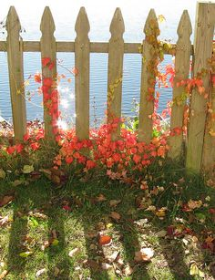 Look at the sun sparkling off the ocean through the picket fence. Are those autumn-orange grape vines? So inviting.