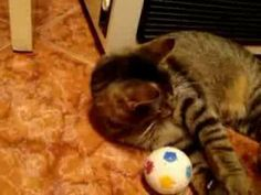 With my toys Cat, Toys, Animals, Animales, Animaux, Cat Breeds, Animal, Games, Animais