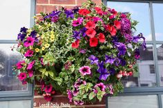 hanging baskets of flowers | Picture of flowers in a hanging basket in Leeds.