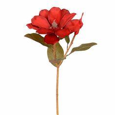 Red Magnolia Stem