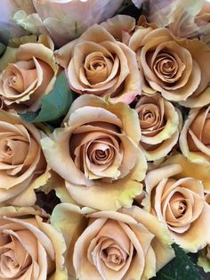 Bronzy/golden or deep nude shade. Called 'Combo'...Sold in bunches of 20 stems from the Flowermonger the wholesale floral home delivery service.