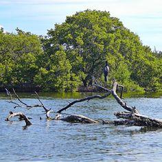 Parque Nacional Laguna de la Restinga (Isla Margarita)