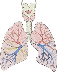 Simple home remedies to fight bronchitis and prevent this disease.