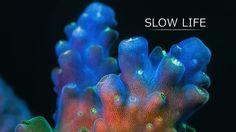 Marine life in HD, timelapse.