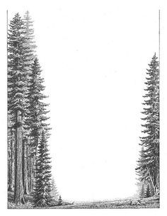 redwood tree black and white drawing - Google Search