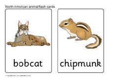 North American animal flash cards (SB9066) - SparkleBox