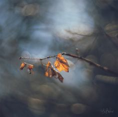 *** Leaves, Clouds, Autumn, Nature, Flowers, Outdoor, Outdoors, Naturaleza, Fall Season