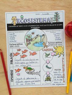Ecosistema Hoja de Repaso- Doodle notes Bullet Journal School, Bullet Journal Banner, Bullet Journal Notes, Bullet Journal Ideas Pages, Bullet Journal Layout, Class Notes, School Notes, Gcse Science Revision, School Study Tips