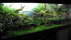 paludarium- watching fish while I hear little frogs chirping- I'm going to my happy place:)