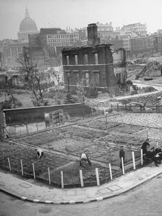 London's East End Residents Cultivating Vegetable Garden in Bombed Ruins