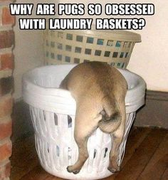 Tucker always used to sleep in our laundry baskets as soon as we brought the clothes up from the dryer.. Cutest thing ever <3
