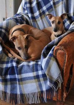 Here are Victoria's two whippets Honey Bee and Flee Fly, they are Brora super models and have been appearing in our shoots since they were puppies. Here they are relaxing on one of their many Brora rugs after a busy day of modelling!