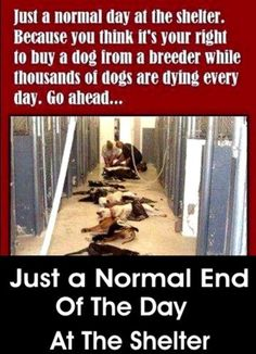 Think of all the people who need to be put down?  A lot! Not all of these innocent souls!