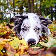 Tips And Tricks For Training Your Dog. Photo by Does your dogs behavior frustrate you? You dog might need a little more training. Fall Dog Photos, Cute Dog Photos, Dog Pictures, Family Pictures, Autumn Photography, Animal Photography, Photography Ideas, Dog Calendar, Calendar Ideas