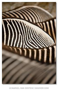 Layers by Marsel van Oosten | Via Flickr | Zebras closeup