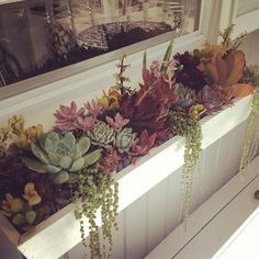 Succulent window box by Simply Succulent https://www.facebook.com/pages/Simply-Succulent/222665291108990