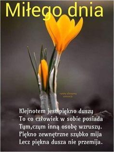 Positive Quotes, Good Morning, Nostalgia, Herbs, Positivity, Life, Tulips, Quote, Good Morning Funny