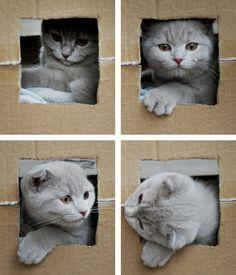 ~Cat in a box~