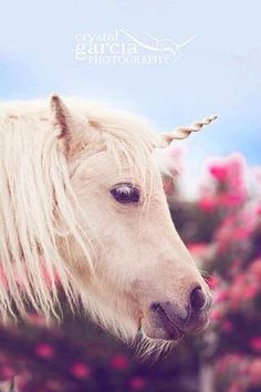 Cuerno de unicornio para caballos y ponis