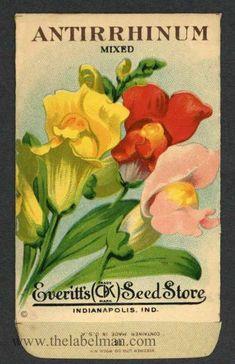 EVERITT'S SEED STORE,  Antirrhinum 21, Vintage Seed Packet