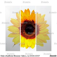 Only a Sunflower Blossom + fade out version Triptych