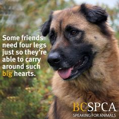 Spike is ready to give his heart to his new forever family. He can't wait to meet you. Click Spike's picture to learn more about him.