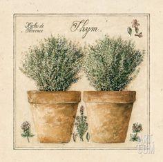 Herbes de Provence, Thym Art Print by Laurence David at Art.com