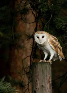 Owls and Halloween go together, don't they? This is the best barn owl photo I have ever seen. via   HAPPY HALLOWEEN! Hope it's spooktacul...