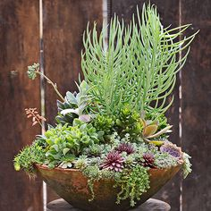 The same rules of all great container gardens apply to this succulent container: It contains a thriller (on top), a spiller (over the side), and filler (in the middle).