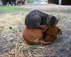 They will happily sleep on a warm, fluffy dog. | 28 Pictures That Show That Cats…