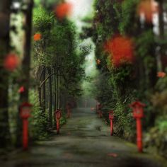 A little path through the forest in Hakone, Japan. from Trey Ratcliff at http://www.StuckInCustoms.com - all images Creative Commons Noncommercial