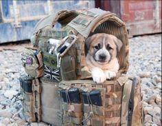 soldiers & their saved animals in war~best friends~unconditional love