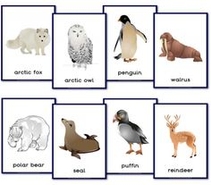 Animal Themed Teaching Resources - Primary Treasure Chest - Animal Themed Teaching Resources – Primary Treasure Chest Printable letter-sized posters of polar animals Polo Sul, Polo Norte, Animal Activities, Preschool Activities, Polar Animals Preschool Crafts, Artic Animals, Penguins And Polar Bears, Animal Posters, Poster S