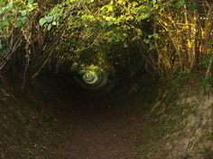 A holloway in Normandy. Some holloways are overgrown by the trees that border them, so they resemble green-roofed tunnels.