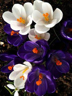 Flores:)