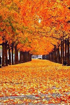 Fall Season..