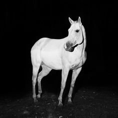 White Horse 02 by Troy Moth   Mammoth & Co.