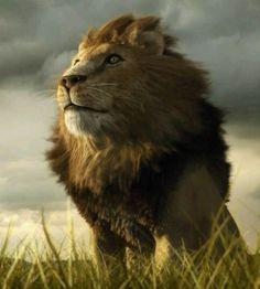 wow what a beautiful majestic animal