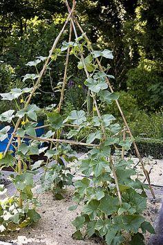 Potager en hauteur | Votre Maison Votre Jardin